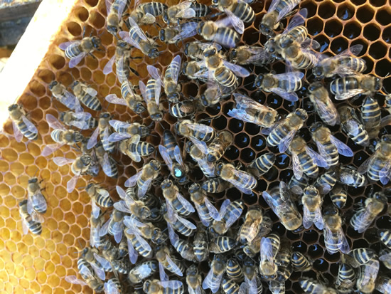 Bunky s medom a pracovité včely